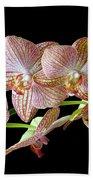 Orchid Phalaenopsis Flower Beach Towel