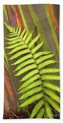 Rainbow Eucalyptus And Fern Beach Towel