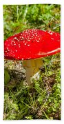 Red And White Potted Toadstool Beach Towel