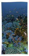 Reef Scene With Coral And Fish Beach Towel by Mathieu Meur