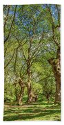 Relaxing Planes Trees Arbor Beach Towel