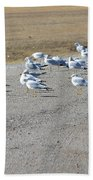 Ring Billed Gulls  Beach Towel