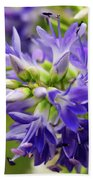 Royal Botanical Garden Of Madrid Beach Towel