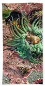 Sea Anemones Beach Towel
