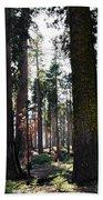 Sequoia National Park Beach Towel