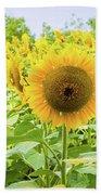 Sunflowers Field Beach Towel