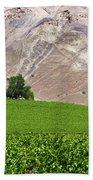 Vines Contrasting With Chiles Atacama Desert Beach Towel