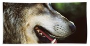 Wolf Portrait Beach Sheet