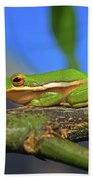 2017 11 04 Frog I Beach Towel