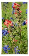 201703300-068 Indian Paintbrush Blossom 2x3 Beach Towel