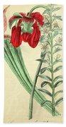 Vintage Botanical Illustration Beach Towel
