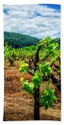 2638- Coffaro Vineyard Beach Towel