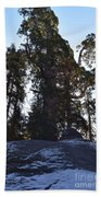 Giant Sequoia Trees Beach Towel