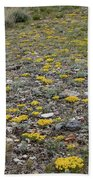 2d07512 Prairie Zinnia In Lost River Range Beach Towel