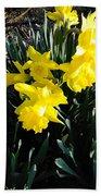 A Daffodil Exhibit Beach Towel