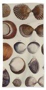 Aquatic Animals - Seafood - Shells - Mussels Beach Sheet
