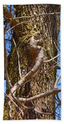 Bare Tree Branches In Early Spring Beach Towel