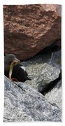 Black Guillemot Beach Towel