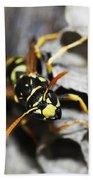 Common Wasp Vespula Vulgaris Beach Towel
