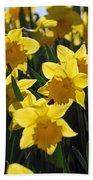 Daffodils In The Sunshine Beach Towel