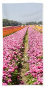 field of cultivated Buttercup  Beach Towel