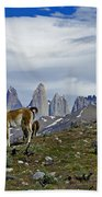 Guanacos In Torres Del Paine Beach Towel