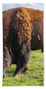 Kansas Buffalo Beach Towel