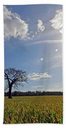 Lone Oak Tree In English Countryside Beach Towel