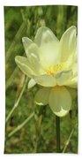 Lotus Flower In Bloom  Beach Towel