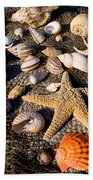 Mix Group Of Seashells Beach Towel