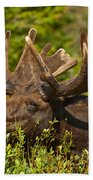 Moose Beach Towel