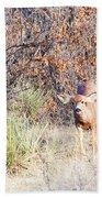 Mule Deer Doe Beach Towel