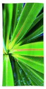 Plants And Flowers In Hawaii 547 C Beach Sheet