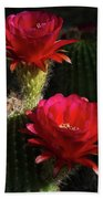 Red Torch Cactus  Beach Towel