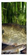 Rock Bass Beach Towel