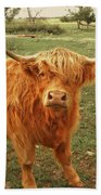 Scottish Highlander With Big Bangs Beach Towel
