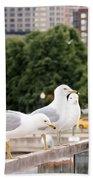 3 Seagulls In A Row Beach Sheet