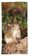 3- Squirrel Beach Towel