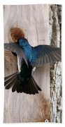 Tree Swallow Beach Towel