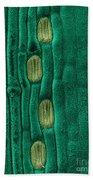 Wheat Leaf Stomata, Sem Beach Towel