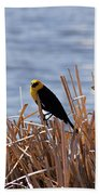 Yellow Headed Blackbird Beach Towel