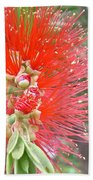 Australia - Red Callistemon Flower Beach Towel