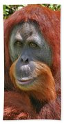 31- Orangutan Beach Towel