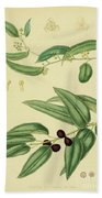 Vintage Botanical Illustration Beach Towel