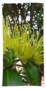 Australia - Pollinating A Green Leionema Flower Beach Towel