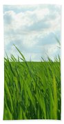 38744 Nature Grass Beach Towel