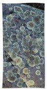 3da5793-dc Lichen On Rock Beach Towel