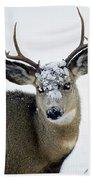 3x3 Mule Deer Buck-signed-#8800 Beach Towel