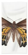 Birdwing Butterfly Beach Towel