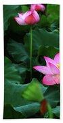 Blossoming Lotus Flower Closeup Beach Towel